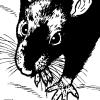 rat in the dark*