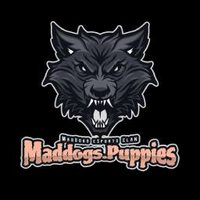 Maddogs.Puppies
