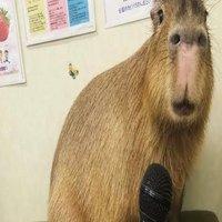 Hyenas Unity Academy