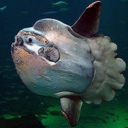 MrMondfisch